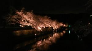 京都市美術館南側桜並木