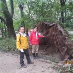 左から とがし豊前京都市議、井上さとし参議院議員 下鴨神社台風被害調査
